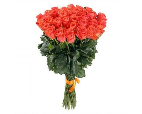 Роза оранжевая 51шт.